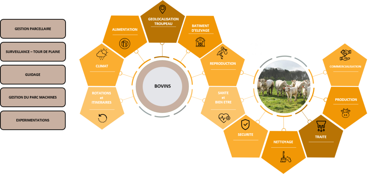 Itinéraire Bovins